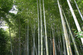 Arashiyama Bamboo Forest in Kyoto, Japan, Asia. — Stock Photo