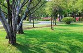 Garden public park,  Thailand — Foto Stock
