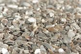 Seashell grit — Stock Photo