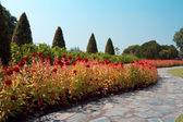 Walkway and flowers in garden — Foto Stock
