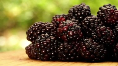 Freshly picked black raspberries — Stock Video