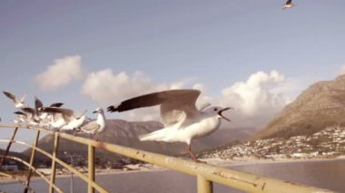 Sea gulls — Stock Video