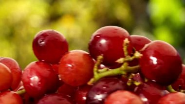 Fresh red Grapes with water drops turning — Stock Video
