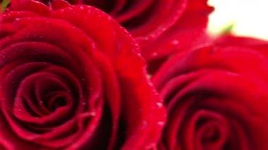 赤いバラ — ストックビデオ
