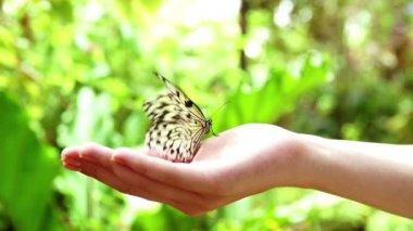 Menina com borboleta — Vídeo Stock