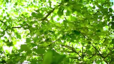 Sun flaring through leaves — Stock Video