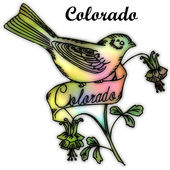 Colorado State bird — Stock Photo