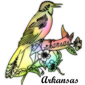 Arkansas State bird — Stock Photo