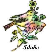 Idaho State bird — Stock Photo