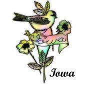 Iowa eyalet kuşu — Stok fotoğraf