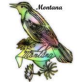 Montana State bird — Stock Photo