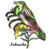 Nebraska State bird — Stock Photo