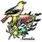 Nevada State bird — Stock Photo