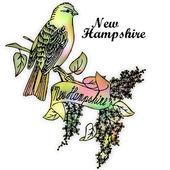 New Hampshire State bird — Stock Photo