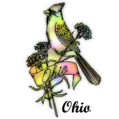 Ohio State bird — Stock Photo