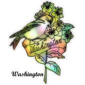 Washington State bird — Stock Photo