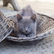 Cute Kitten lying and stretching in the basket — Stock Photo #47041981