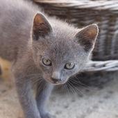 Lurking Kitten — Stock Photo