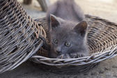 Cute Kitten lying and stretching in the basket — Stockfoto