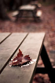 Maple leaf on the table — Stock Photo