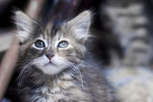 Tabby Kitten — Stock Photo
