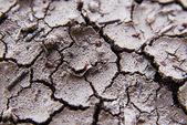 Cracked soil macro shot. — Stock Photo