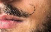 Mustache macro shot. — Stock Photo