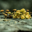 Fungi on a rotting tree stump — Stock Photo