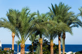 Palm trees on the red sea — Stock Photo