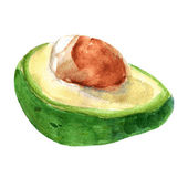 Vector illustration of avocado. Watercolor — Vector de stock