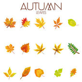 Set Of Different Abstract Autumn Leaves — Stock Vector