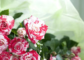 Exquisite bouquet of small roses — Stock Photo