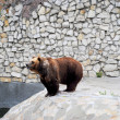Brown bear in Moscow zoo — Stock Photo #51539355