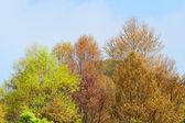 カラフルな葉 — ストック写真