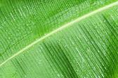 緑のバナナの葉のクローズ アップ. — ストック写真