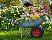 Little boy standing in garden barrow — Stock Photo