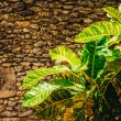 Plants in tropical garden. — Stock Photo #42768973