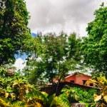 Road in tropical garden — Stock Photo
