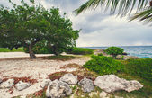 Tropical panoramic beach — Stock Photo