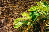 Plants in tropical garden. — Stock Photo