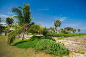 Palm and tropical beach in Tropical Paradise — Stock Photo