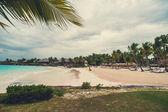 Palmiye ve tropikal plaj — Stok fotoğraf