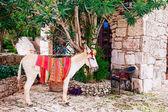 Burro mexicano en pueblo antiguo — Foto de Stock