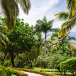 Road in Tropical jungle mountain — Stock Photo #42770059