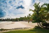 Dłoń i tropikalnej plaży w tropikalnym raju — Zdjęcie stockowe