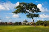 мужчина стоит возле дерева в гольф в тропический рай — Стоковое фото