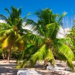 Sunbeds under palm trees on a tropical beach — Stock Photo