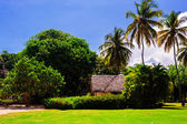 Hut in a tropical jungle — Stock Photo