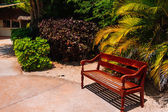 Tropical palm tree and alley with bench. — Stock Photo