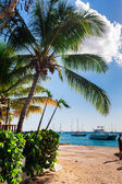 Native typical caribbean islands life — Stock Photo